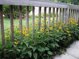 Garden Border Fence Roll Garden Design Ideas
