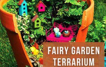 Advices about Fairy Garden Terrarium