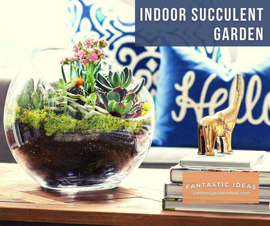 Indoor Succulent Garden is Right Solution