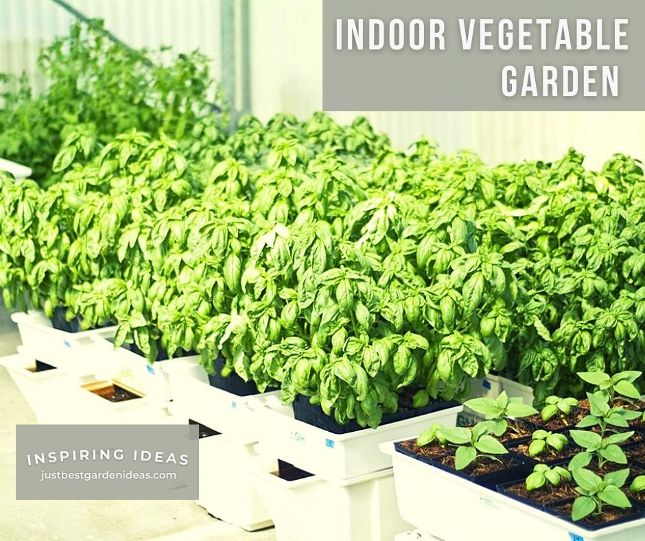 Indoor Vegetable Garden Perfect Idea for Your House