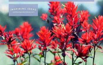 Notes about Indian Paintbrush Flower