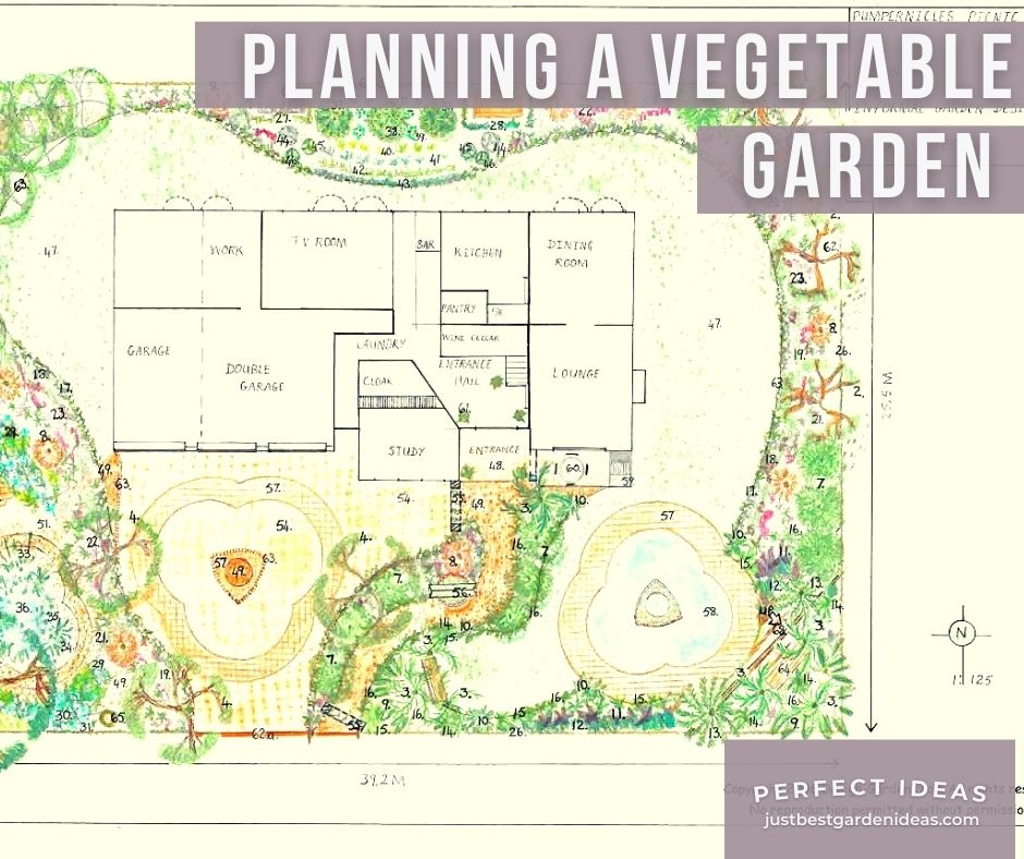 Planning a Vegetable Garden has Gained Immense Popularity