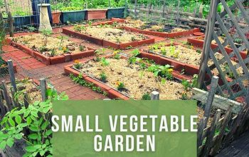 How to Make Small Vegetable Garden