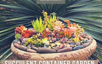 Succulent Container Garden for You