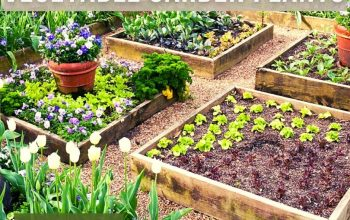 Vegetable Garden Plants Extraordinary and Stylish