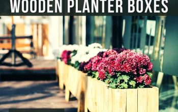 Which of the Wooden Planter Boxes is Better for You