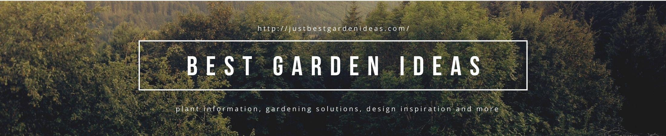 Best Garden Ideas